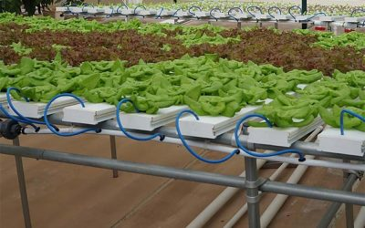 An Introduction to Hydroponics – Off Grid World