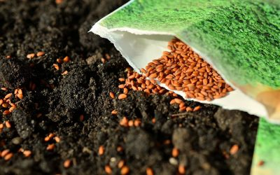 Heirloom, Organic, and Hybrid Seeds: Which are Best?