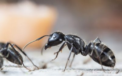 Getting Rid Of Ants -11 All-Natural Ways To Get Rid Of Ants In Your Kitchen