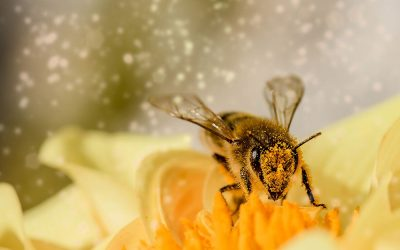 The Importance of Protecting Bees And Other Pollinators From Pesticides